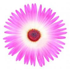 Buz Çiçeği / 15x20 cm