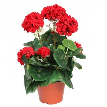 Sardunya / Kırmızı / 30x50 cm