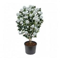 Kamelya / Beyaz 50x100 cm