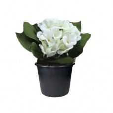 Menekşe / Beyaz 15x25 cm