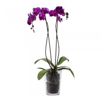Orkide / Mor (Çift Dal) 50x70 cm