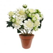 Yıldız Çiçeği ( Dahlia )