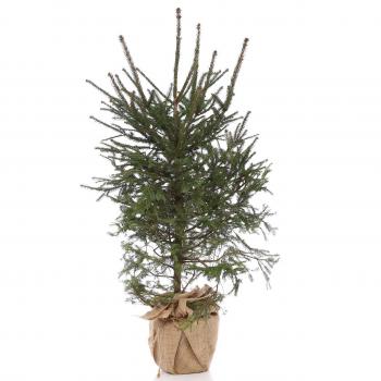Yılbaşı Çam Ağacı / Hediyeli